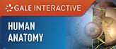 Gale Interactive: Human Anatomy.gif