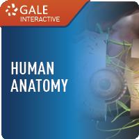 Human Anatomy (Gale Interactive) Web Icon